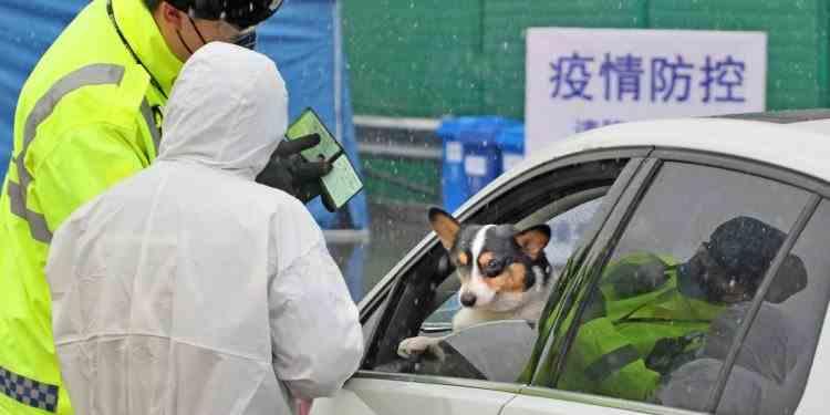 Câine diagnosticat cu coronavirus în Hong Kong