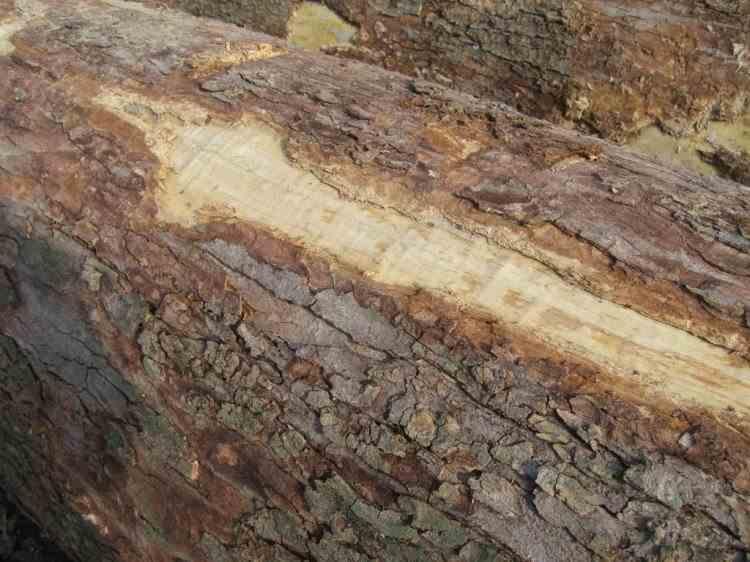 Pădurar măcelărit cu securea de un copil prins la furat de lemne