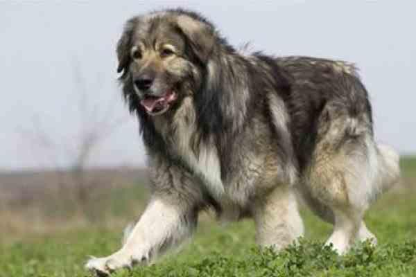 O femeie din Gorj a murit sfâşiată de câinii lăsați liberi de un cioban