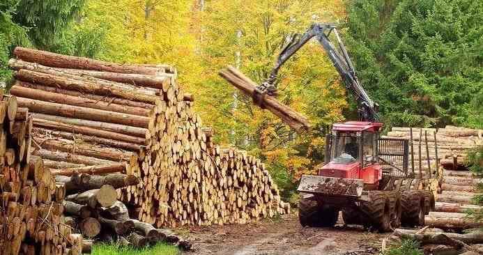 Doi muncitori de la o firmă de exploatare a lemnului au fost găsiți morți