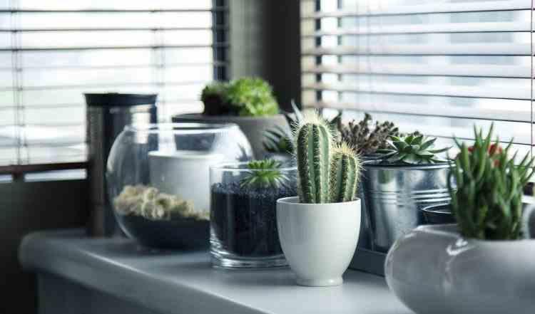 Plante care atrag în casă energiile pozitive, belșugul și bogăția