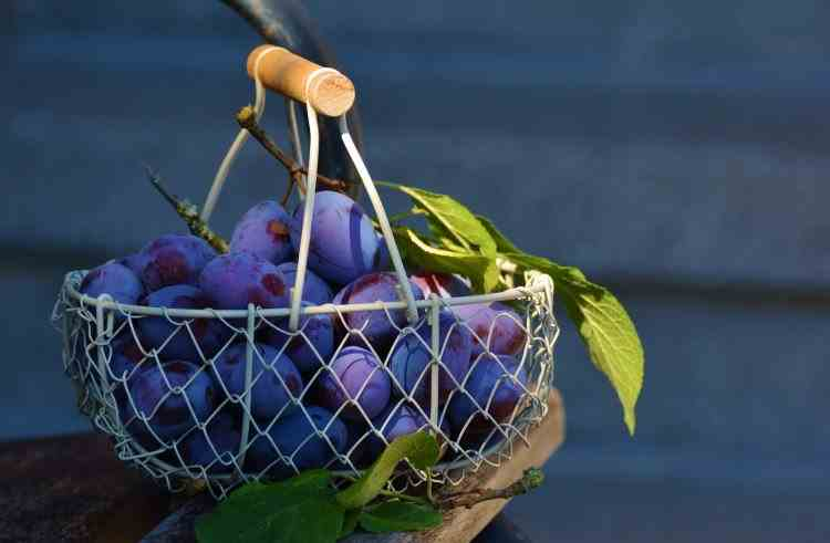 Efectele benefice ale consumului de prune