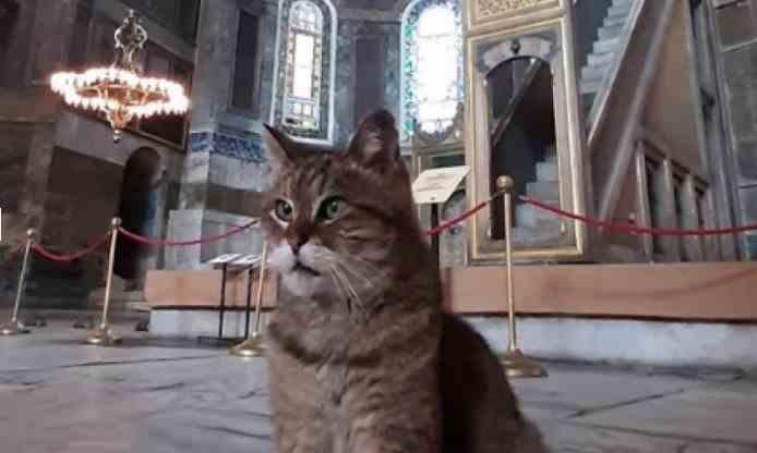 Pisica Gli rămâne în continuare stăpână în Hagia Sofia
