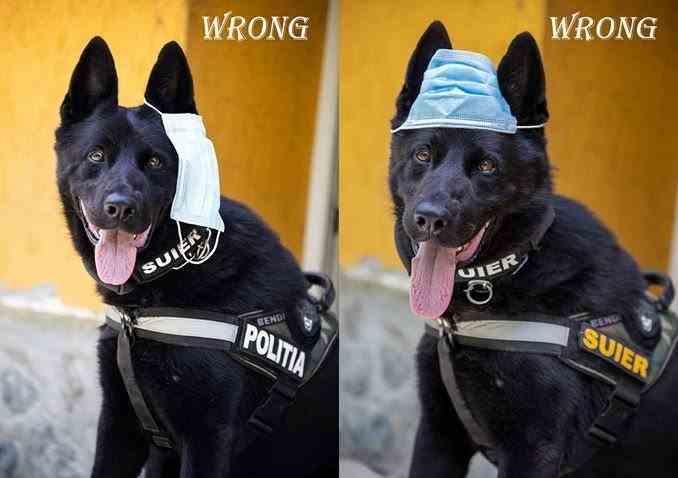 Câinele poliţist Şuier te învaţă cum să porţi corect masca de protecţie