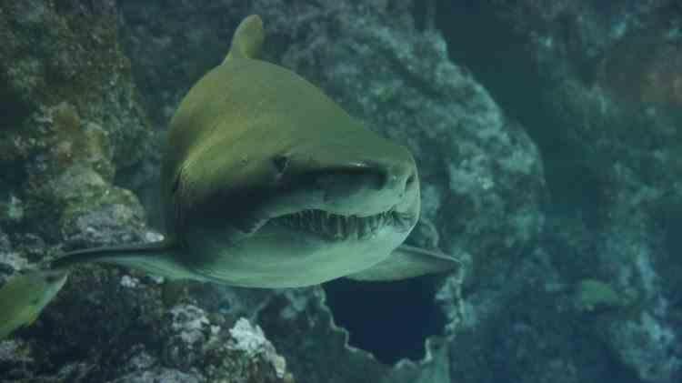 Un bărbat și-a salvat soția din gura rechinului cu pumnii
