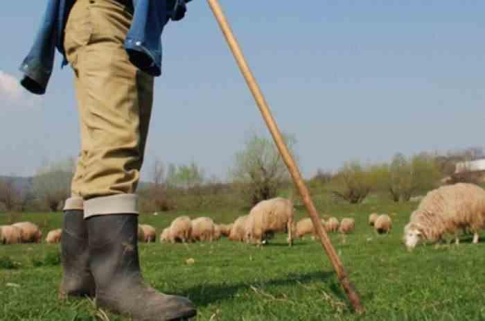 Un cioban a fost împușcat după ce i-a amenințat pe polițiști cu furca