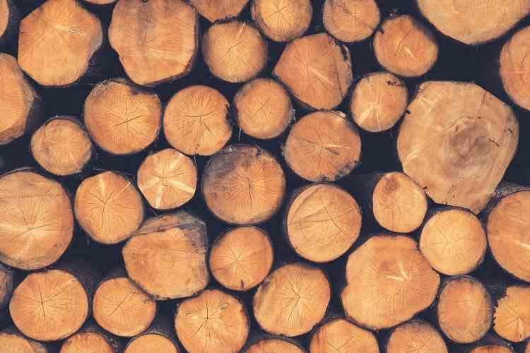 Transportul de lemn fără documente a devenit de astăzi infracțiune
