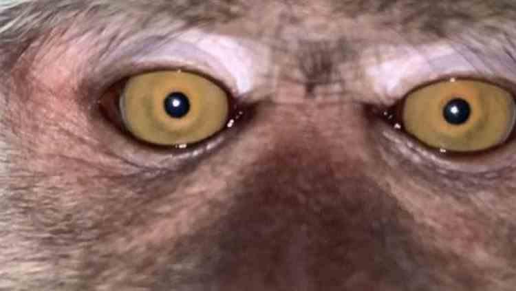 Un tânăr care a avut mobilul pierdut timp de o zi a descoperit în galerie un selfie cu o maimuță
