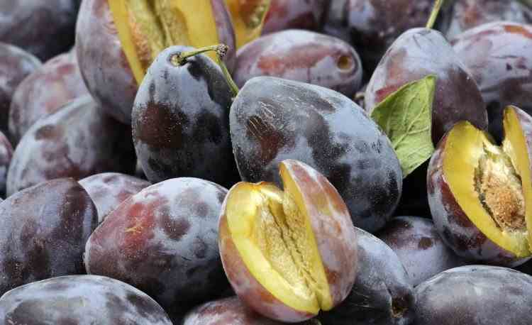 Consumul de prune și colonul sănătos