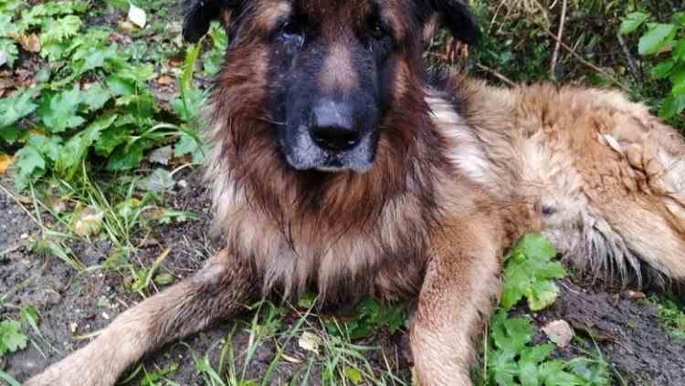 Un cățel a supraviețuit după ce stăpânii i-au făcut o injecție letală și l-au îngropat în pădure