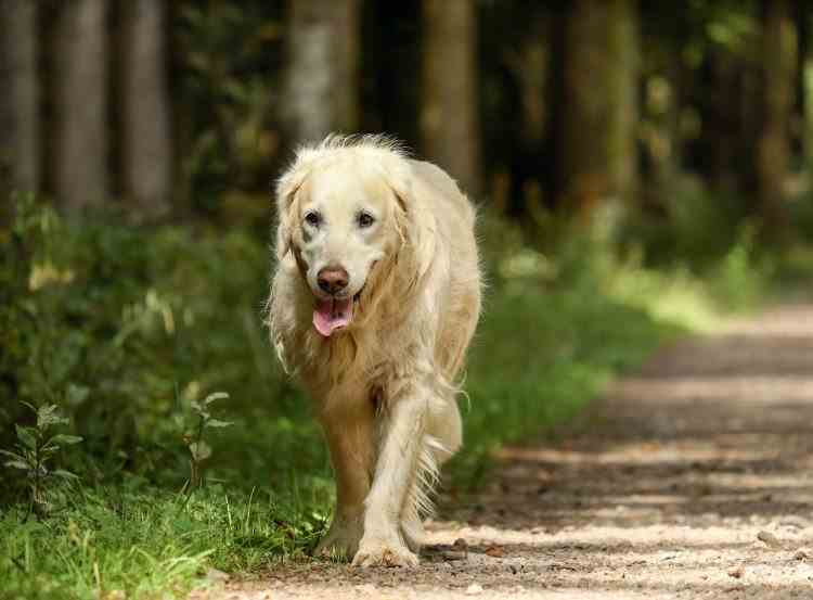 Despre dor și loialitate - Cum a parcurs un cățel sute de kilometri pentru a-și regăsi stăpânii