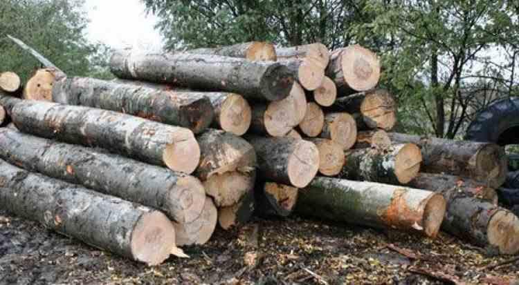 Polițiștii au confiscat peste 1100 de metri cubi de lemn într-o săptămână