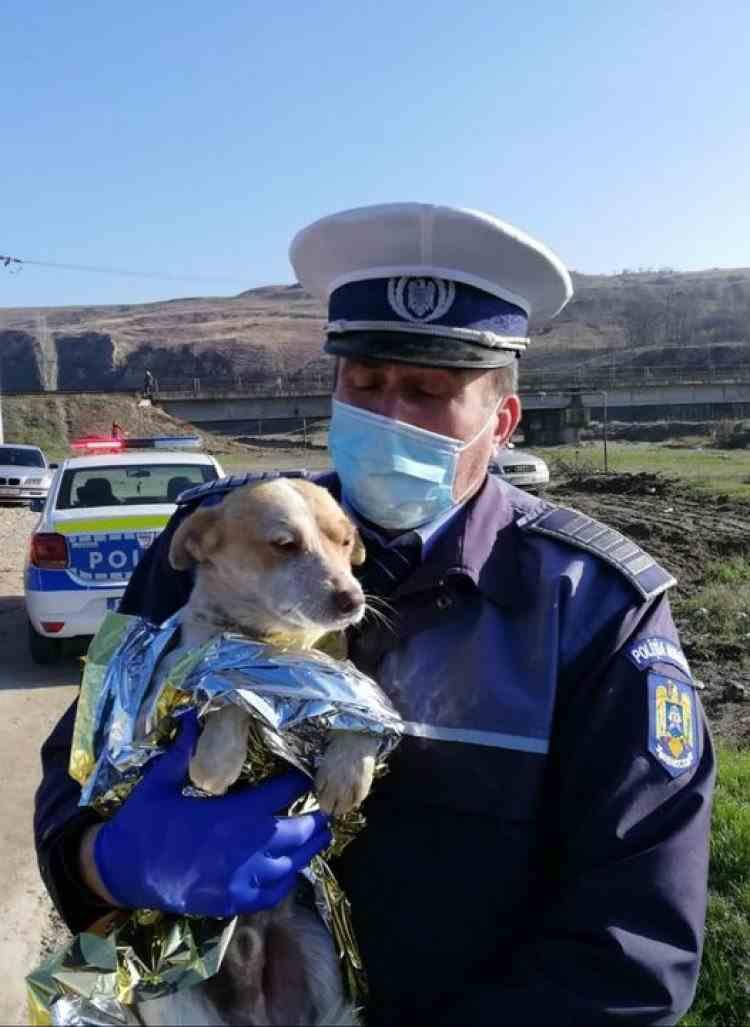 Polițiștii au deschis dosar penal pentru schingiuire după ce un cățel a fost ars de viu - Animăluțul a fost salvat