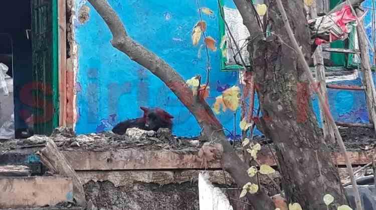 Un câine își așteaptă și acum stăpâna decedată într-un incendiu