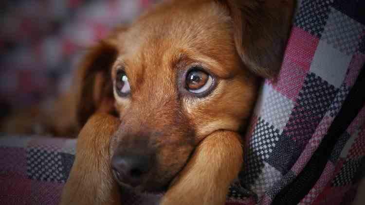 Timișoara - Persoanele care locuiesc la bloc trebuie să obțină acordul vecinilor pentru a deține animale de companie