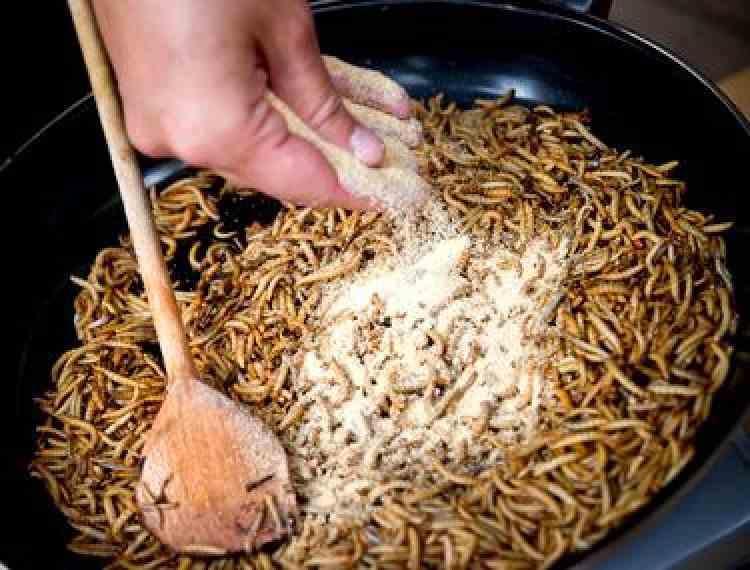 Prima insectă declarată sigură pentru consum uman de Autoritatea Europeană pentru Siguranța Alimentelor - Liber la viermii de făină în burgeri și paste