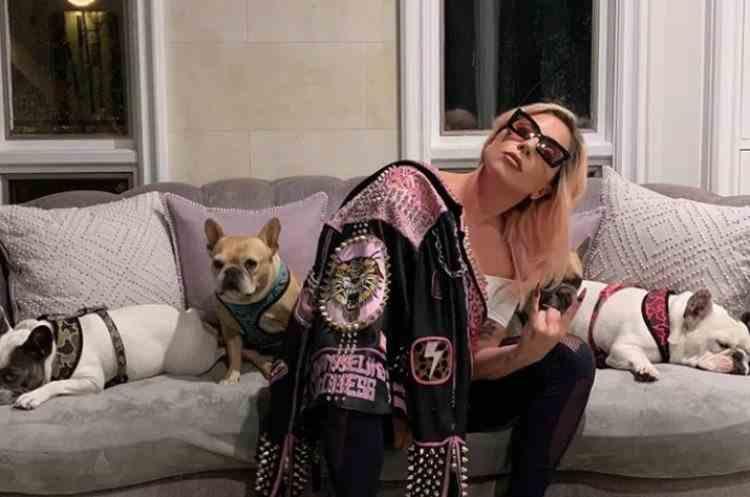 Câinii lui Lady Gaga au fost găsiți - Cine va primi recompensa de 500000 de dolari