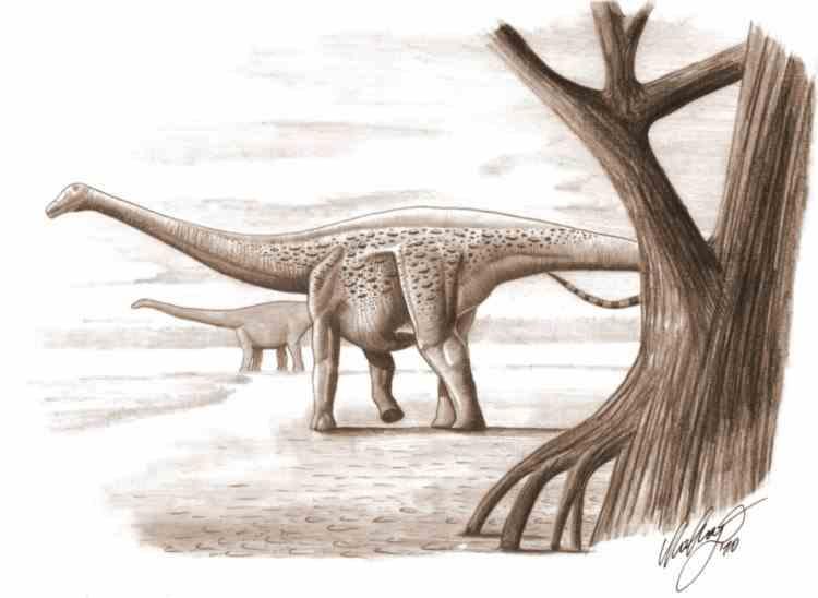 Un sit al dinozaurilor din Transilvania a fost regăsit după 100 de ani - Aici fusese descoperit Magyarosaurus dacus
