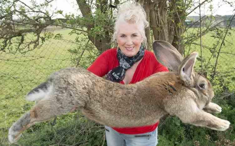 Darius, cel mai mare iepure din lume, a fost furat