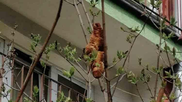Locuitorii unui imobil din Cracovia și-au ținut ferestrele închise timp de două zile, de teama unui croissant