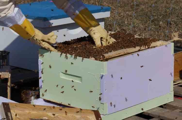 Un bărbat din Gorj a fost ucis de albinele sale, deși purta costum de protecție