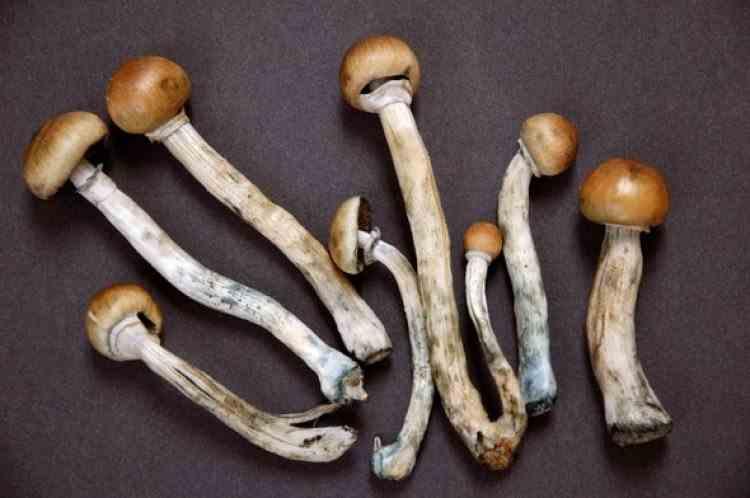 Unui bărbat i-au crescut ciuperci halucinogene în sânge după ce și le-a injectat în vene