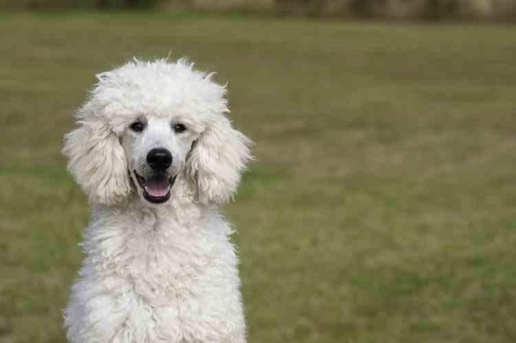 O femeie care şi-a înscenat moartea după ce a furat 1 milion de euro a fost găsită cu ajutorul câinelui său