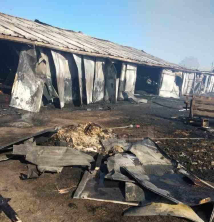Peste 30 de vaci au ars de vii în timpul unui incendiu izbucnit într-o fermă din Suceava
