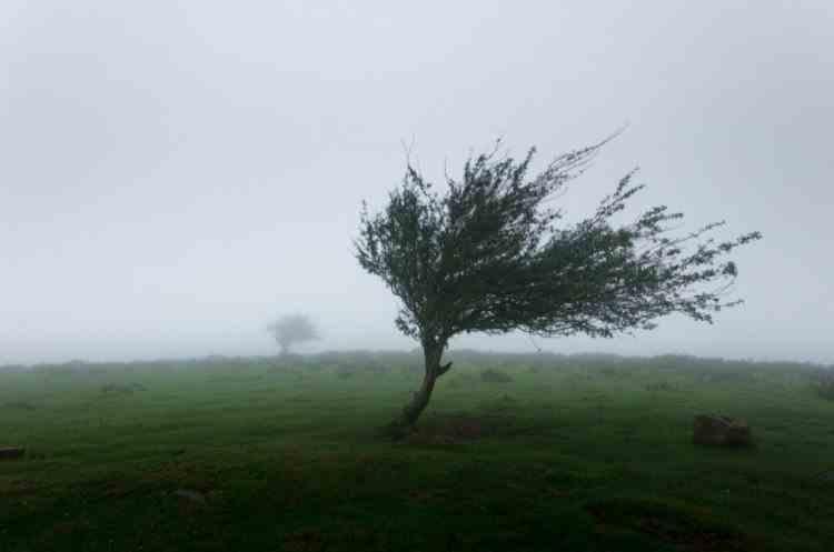 Cod galben de vânt și ploi, în toată țara - Zonele în care sunt așteptate rafale de până la 100 km/h