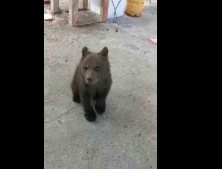 Un bărbat din Baia Mare a fost reţinut pentru deţinerea unui pui de urs - Polițiștii au găsit în locuință și zeci de kilograme de vânat