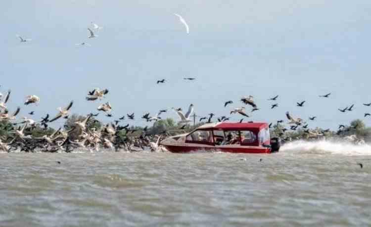 Plângere penală pentru firma al cărui barcagiu a intrat cu barca într-o colonie de pelicani în Delta Dunării