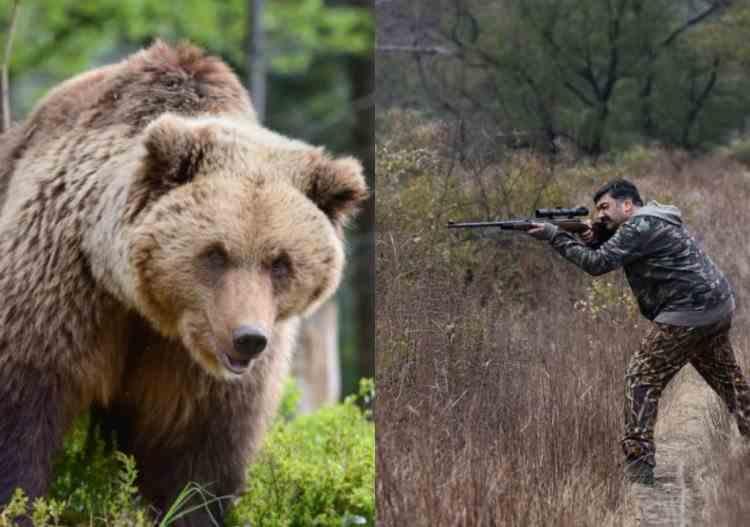 Recompensele pentru persoanele care împușcă sau eutanasiază urșii agresivi - Prevederile ordinului dat de Ministerul Mediului